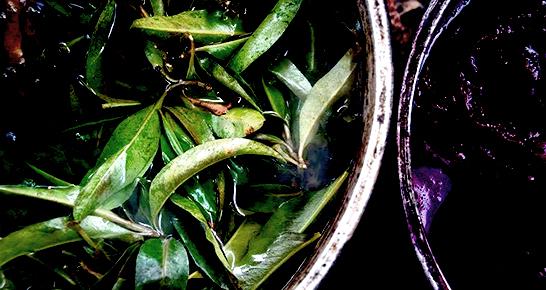 Blätter in einem Eimer zur Farbgewinnung